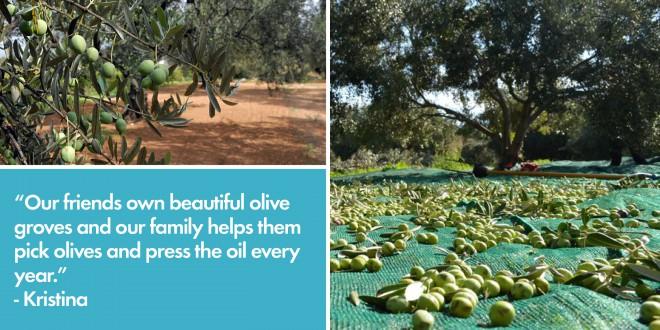 Making Olive Oil in Croatia